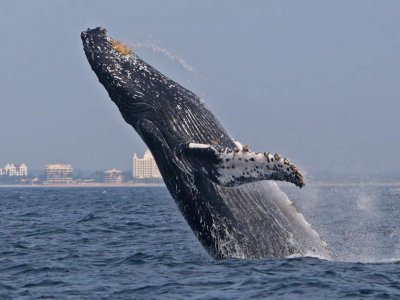 Jd Tours Whale Watching