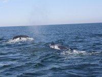 Familia de ballenas