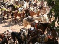 Caballos y rancho