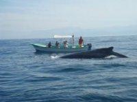 Cerca de las ballenas