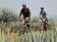 Ciclismo entre maguey