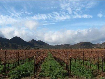 Baja Wine and Sun