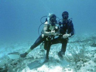 Caribbean Seafari Dives