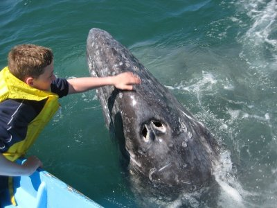 Todos Santos Eco Adventures Whale Watching