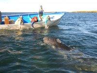 Excursiones de whale watching