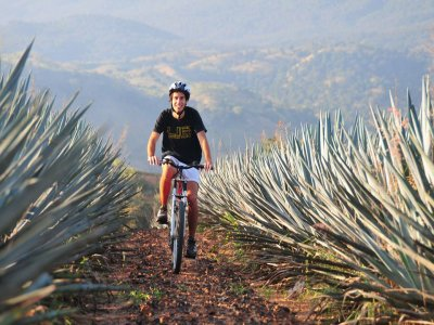 Tequila Bike Rental