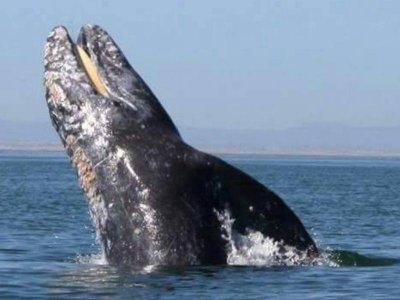 Club Cantamar Whale Watching
