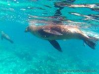 Vista de actividad snorkel