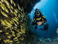 Diving expeditions