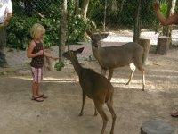zoológico interactivo