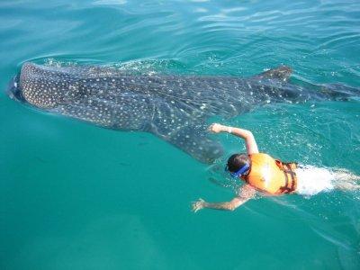 Alestal Transfers & Tours Snorkel