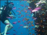 Diving with tropical fish