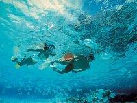 Snorkel on reefs