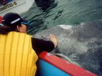 Maravillosa experiencia con ballenas