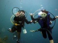 Spring diving