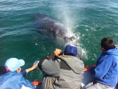 Eduardos Tours Whale Watching