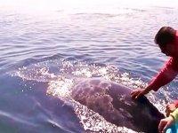 Ballenas de cerca