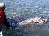Tocar una ballena