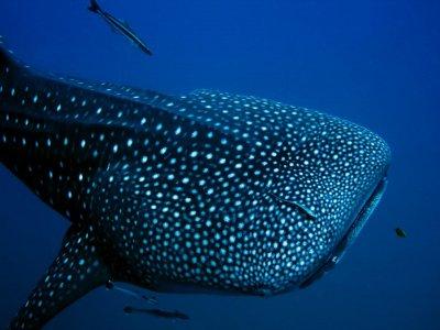 Leo's Baja Oasis Snorkel