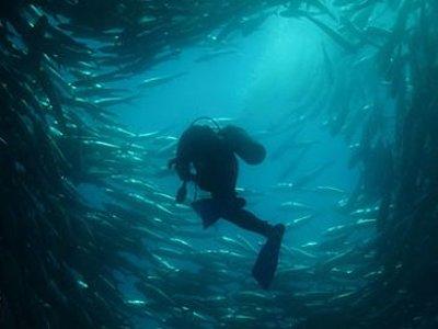 Marlin Adventures Buceo
