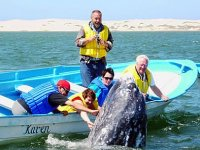 Saludo de ballena