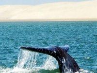 Ver ballenas