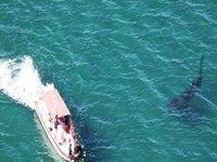 Avistamiento del Tiburón ballena