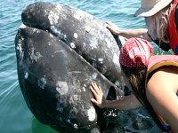 Ballenas de muy cerca