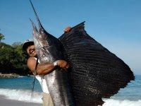 Grande pez espada