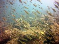 bancos de peces