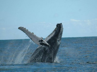 Ecoturs Mx Whale Watching