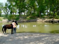Horses and landscapes