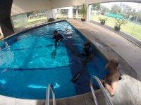 Snorkel in pool