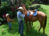 Caballos en Veracruz
