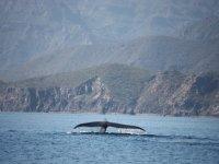 Meet the whale