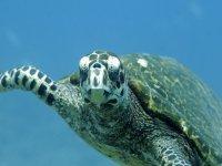 Conoce las tortugas practicando snorkel