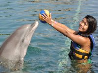 activities with dolphins