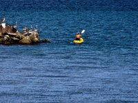 Kayak con pelicanos