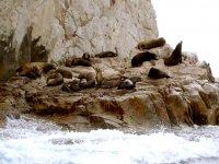 Piedra de leones marinos