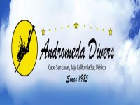 Andromeda Divers Whale Watching