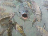 Admira a los peces