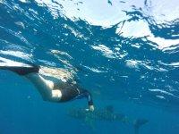 Recorre todo en snorkel