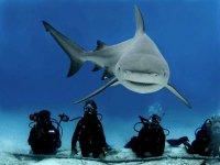con el tiburon toro