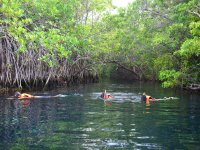 Snorkel in the cenote