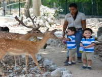Interacting with the deer