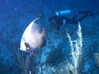 Buceo en el Mar Caribe