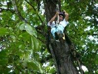 Canopy por los arboles