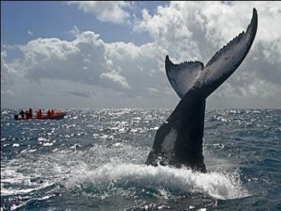 Sakmul Whale Watching