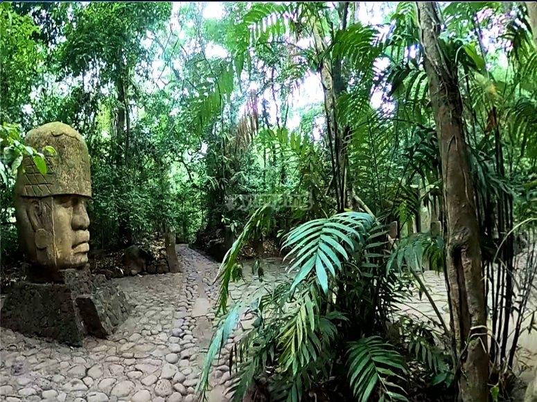 Experiencia en la selva
