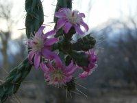 Flores en la biosfera